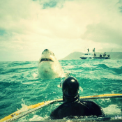Great White Shark Cage Diving - Gansbaai